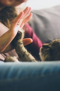 How-to-Control-Cat-Dander